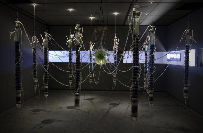 "Gilberto Esparza, ""Plantas Autofotosintéticas"", 2015"