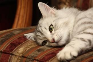 El Gato y la Espiritualidad