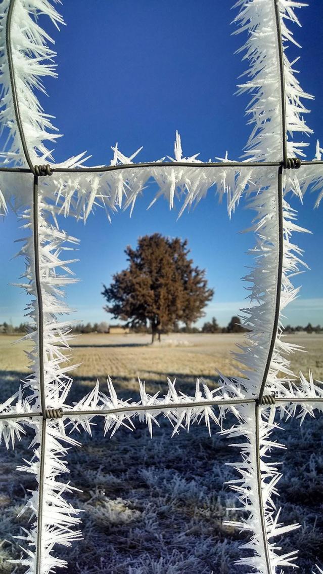arttextum-replicacion-snow.jpg