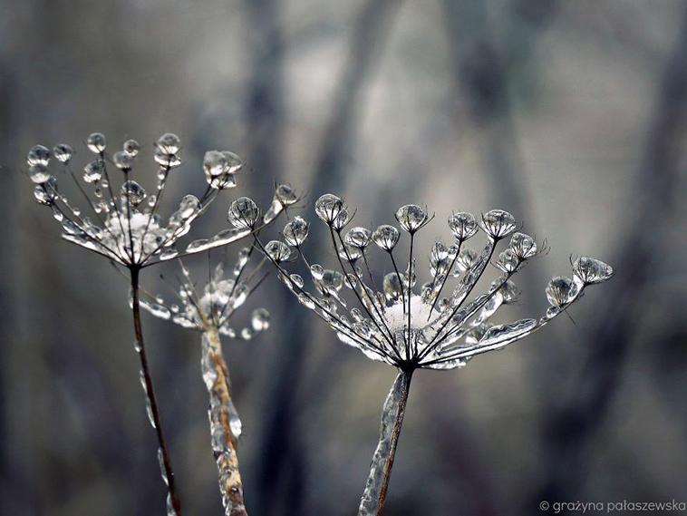 frozen-ice-art-26-arttextum-replicacion.jpg