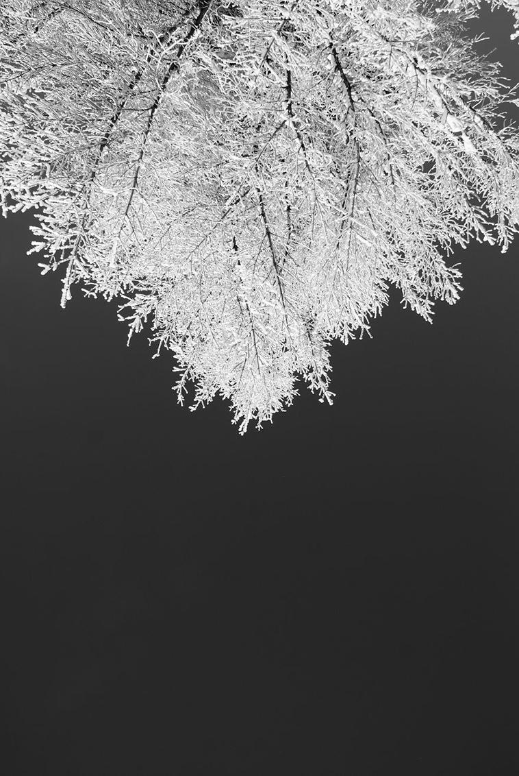 frozen-ice-art-31-arttextum-replicacion (1).jpg