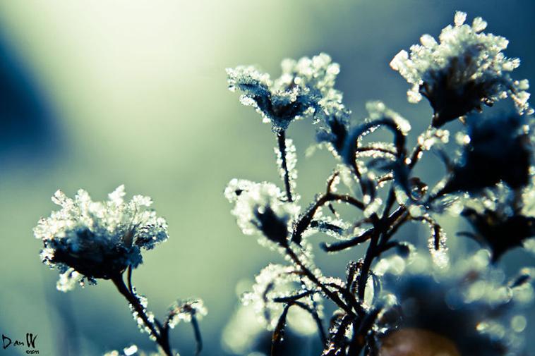 frozen-ice-art-37-arttextum-replicacion.jpg